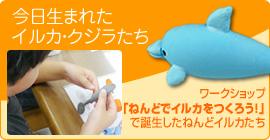 今日生まれたイルカ・クジラたち