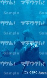 御蔵島の イルカたち