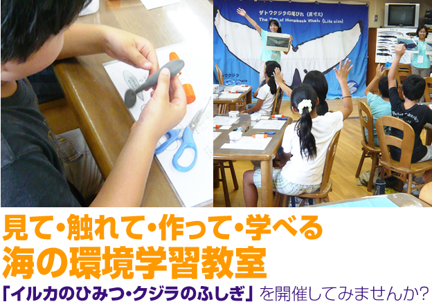 見て・触れて・作って・学べる 海の環境学習教室 「イルカのひみつ・クジラのふしぎ」を開催してみませんか?