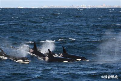 12月20日(土) ICERCレクチャー「ヒト、イルカ・クジラに出会う」