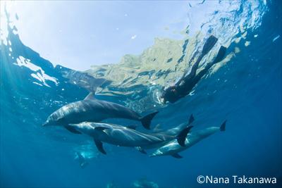 イルカと上手に泳ぐために(C)Nana Takanawa