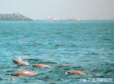 ©銚子海洋研究所