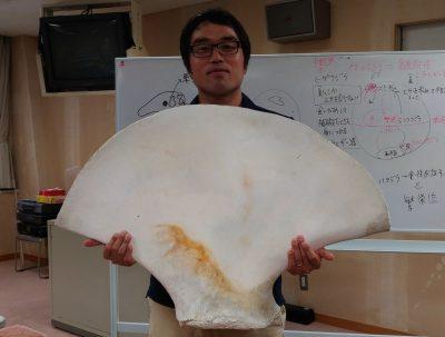 学芸員の稲葉さんとザトウクジラの肩甲骨