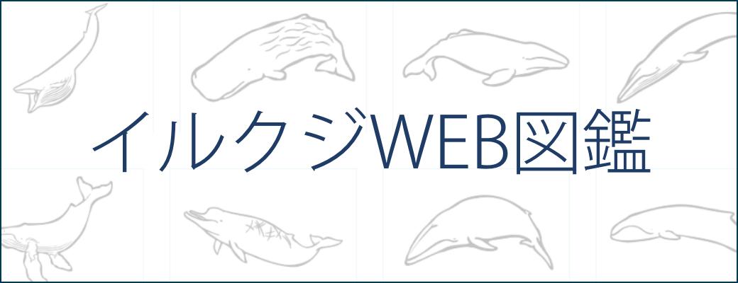 イルクジWEB図鑑