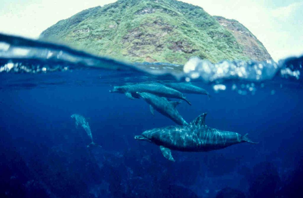 御蔵島とイルカ